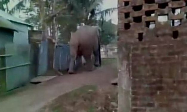 Elephant Attacks Indian Village – India may be Asia's Florida
