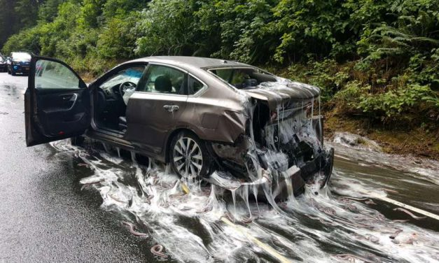 'Snot Snakes' Create Goopy Traffic Mess in Oregon