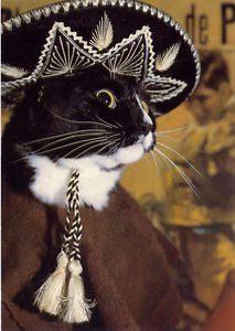 Black cat in a black sombrero
