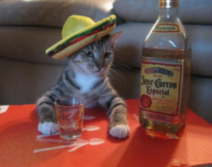 Cat in a sombrero with a bottle of tequila