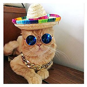 A cat in a sombrero with John Lennon glasses