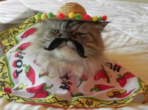 A Persian cat in a sombrero and a mustache